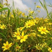 कोंकणातील सुवासिक फुले