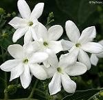 jaai-flowers