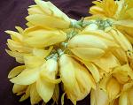 Kevada flowers