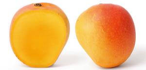 आंब्यांनी भारलेला आम्रवृक्ष - mangoes
