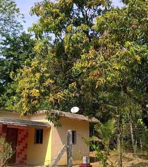 mango-season-begins-malvani-days